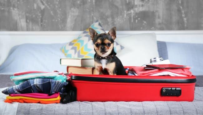 🐶犬と旅行、最高の思い出作りのために必要な準備とは?