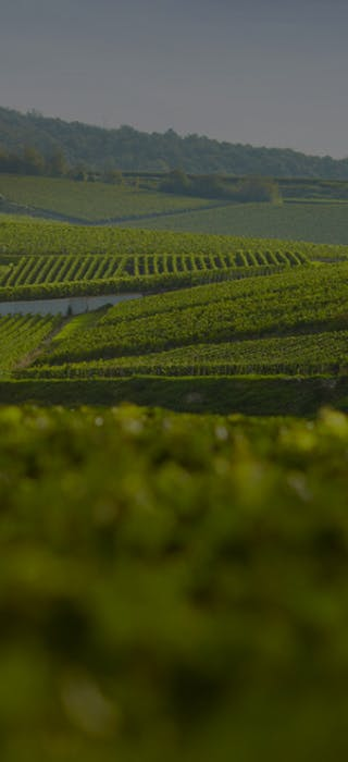 IMPORT WINE IN BELGIUM DIRECTLY FROM FRENCH WINEGROWERS