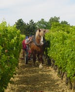 Winegrower from Bordeaux