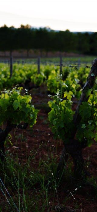 Soutenir les vignerons, c'est commander en direct ! #JAIMEMONVIGNERON - Les Grappes