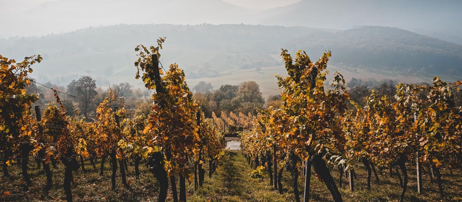 Fournisseur Vin Restauration