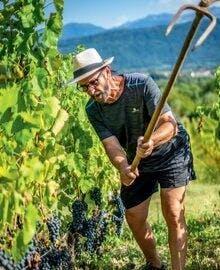 Château Mérande - Savoy Winegrower
