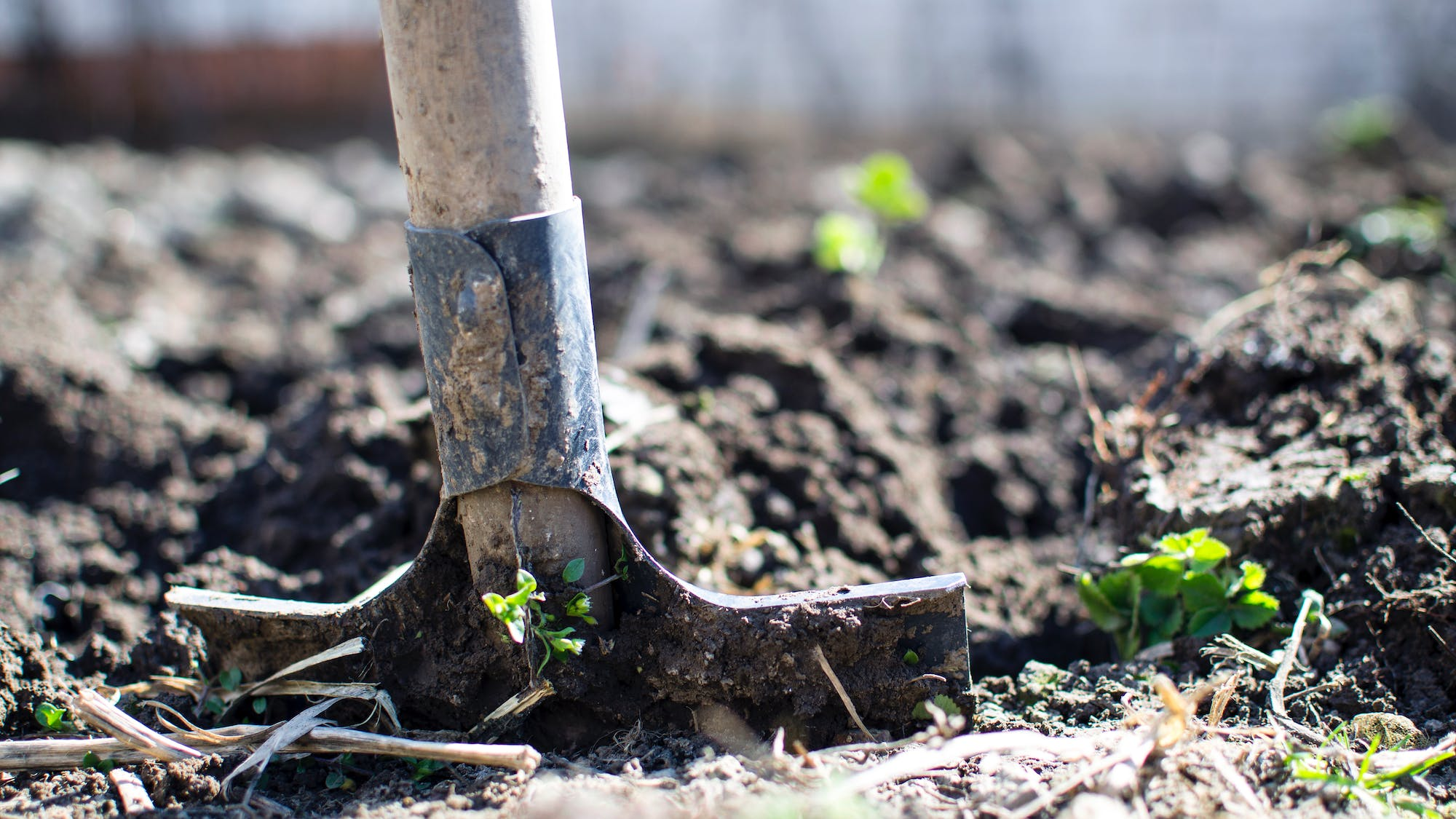 Header for To Dig or Not to Dig: Raised Bed No-Dig Gardening article