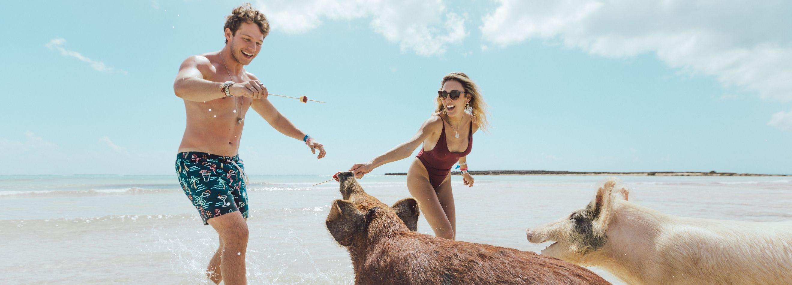 pigs on beach grand bahama