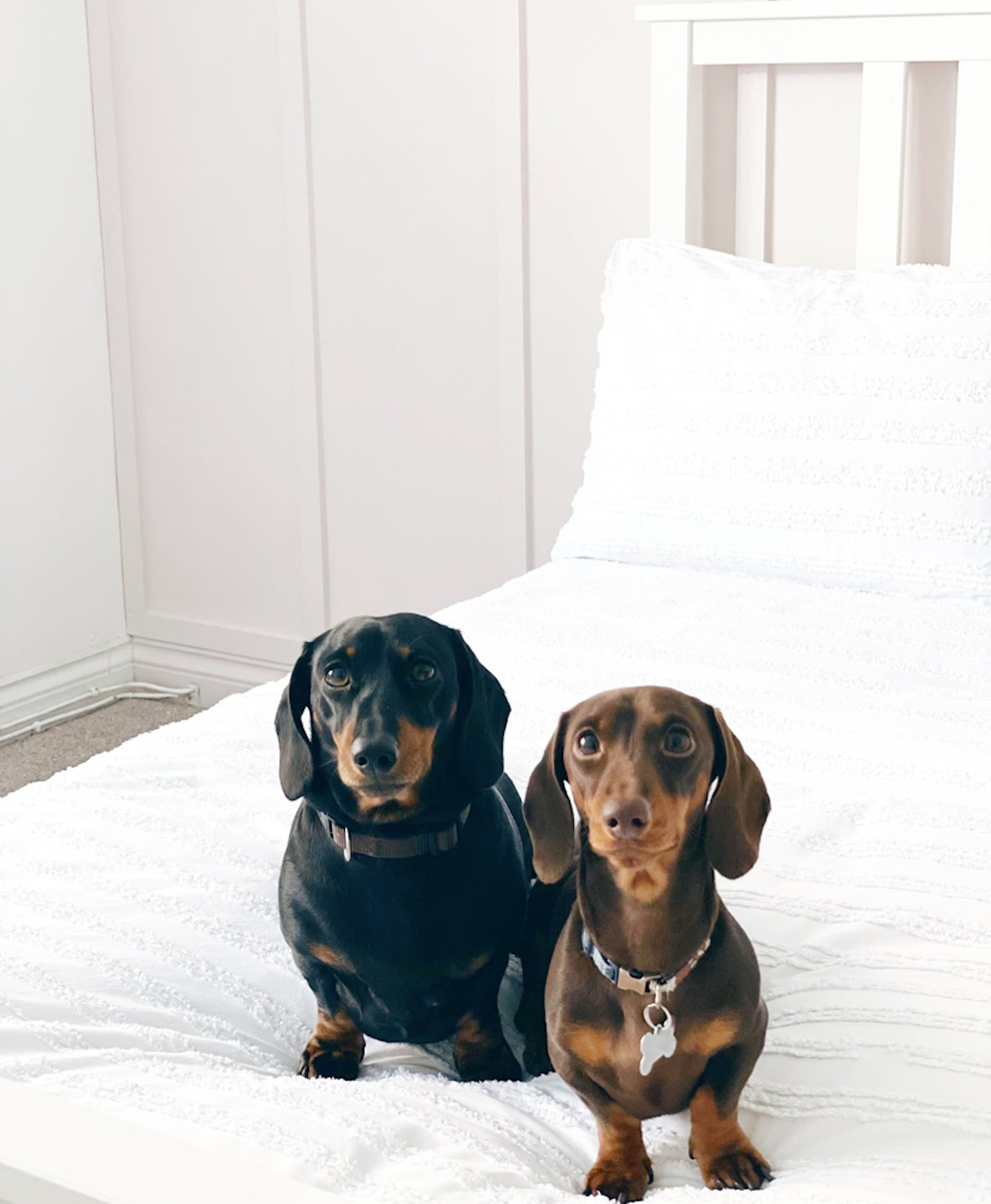 Two dog sitting on bed in bedroom painted with Lick Pink 04