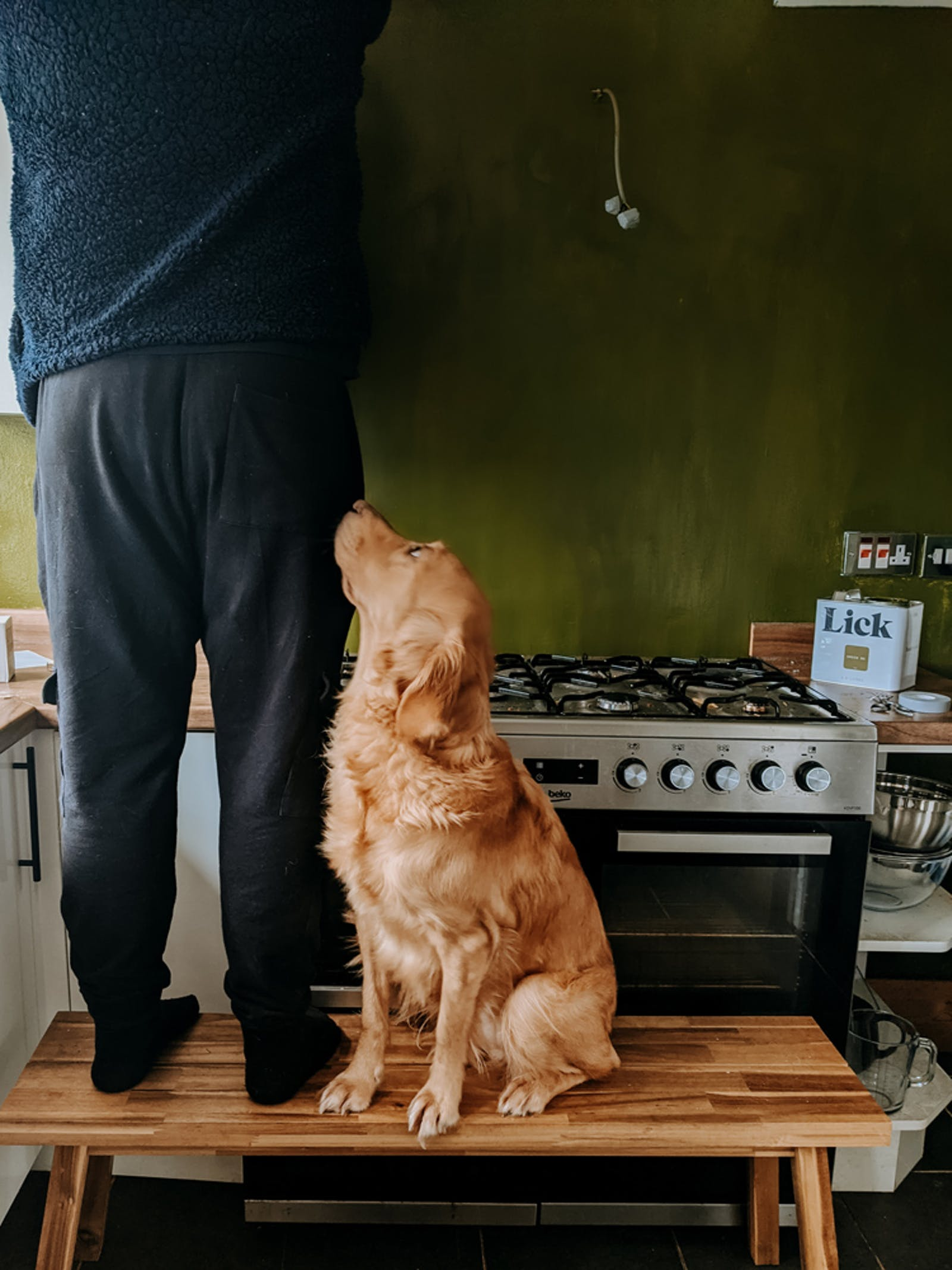 Dog looking up at owner who is panting their kitchen Green 05