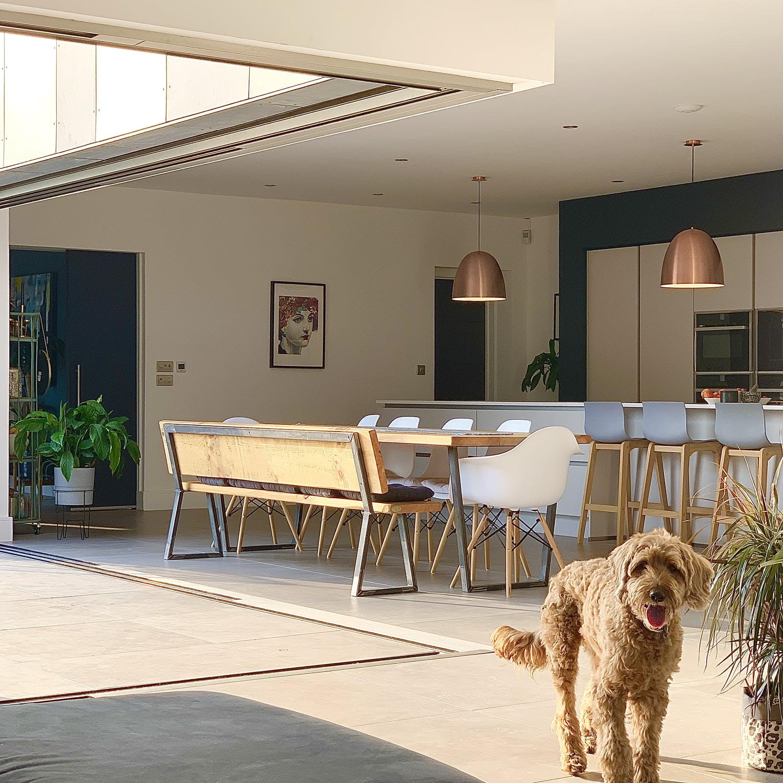 Open plan kitchen and dining room with open sliding doors, and a dog in the forefront of the image.