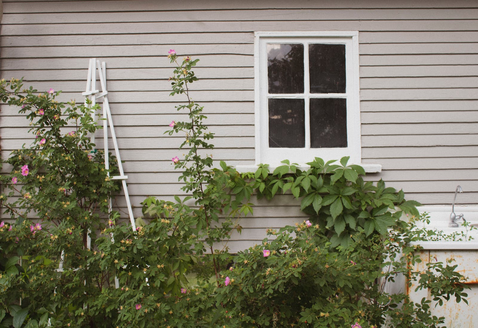 Grey garden shed with greenery against the wall