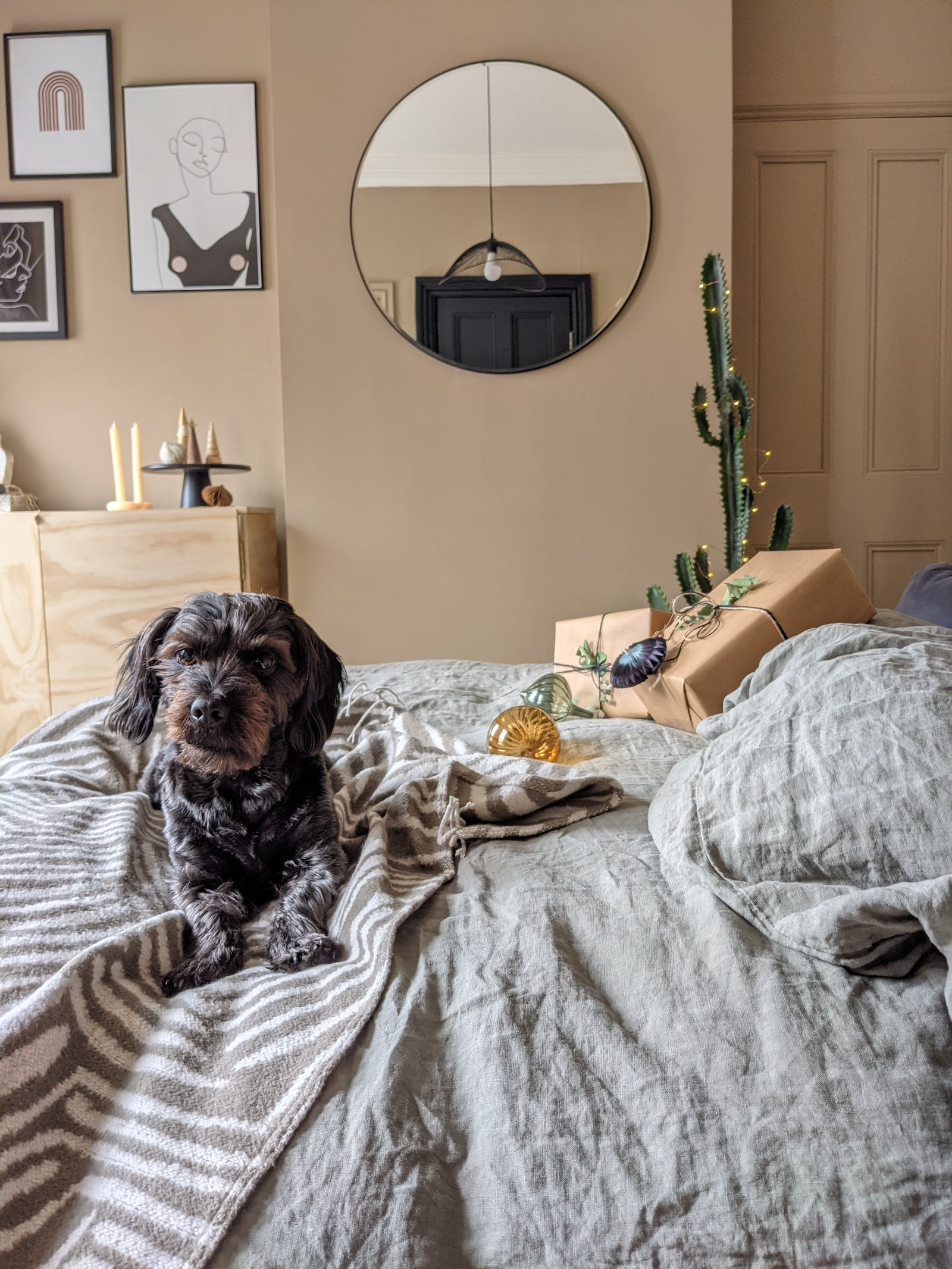 Dog sitting on top of a bed, bedroom walls painted in Lick Beige 02