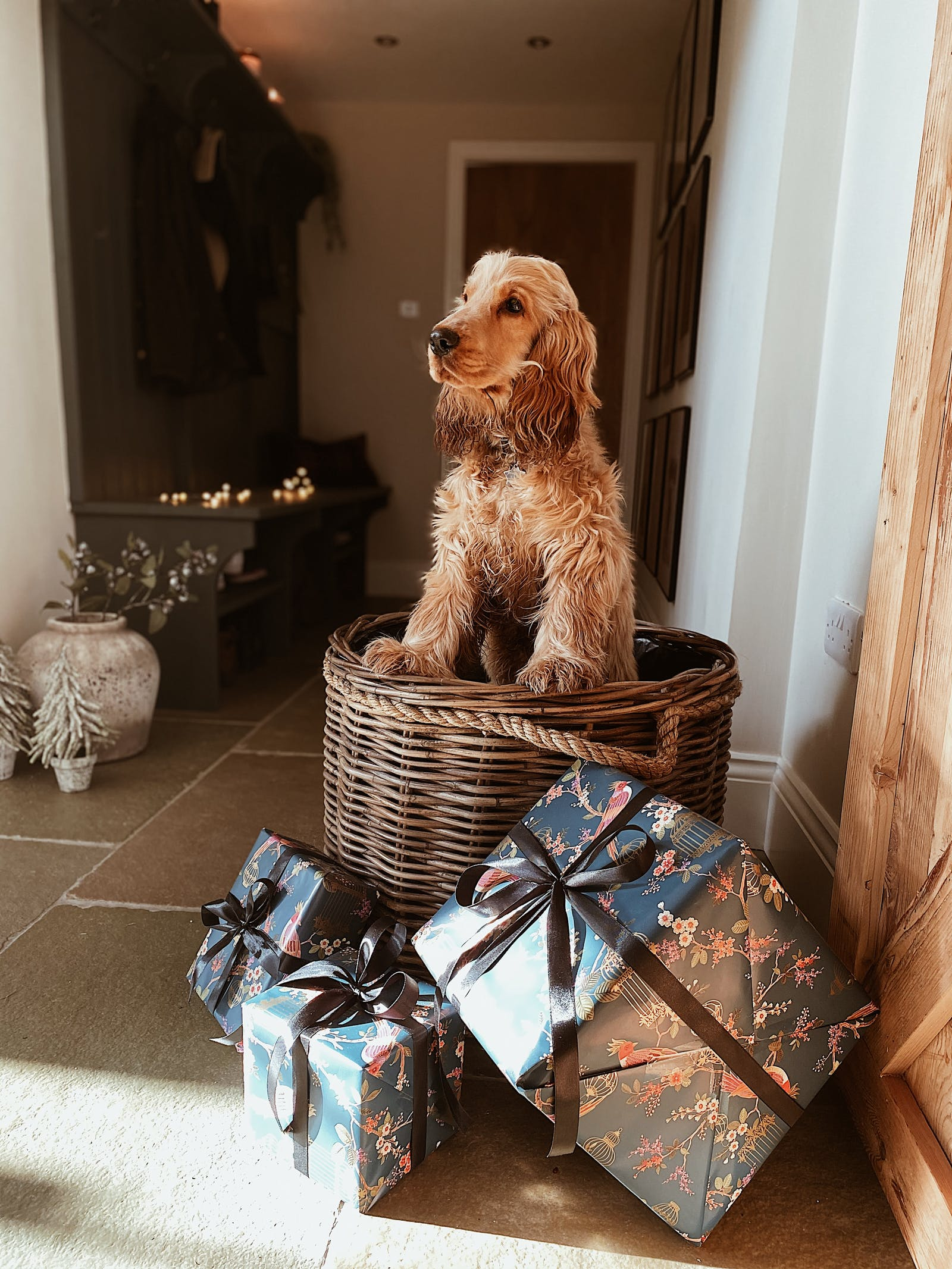 Dog sitting in basket surrounded by gifts in a hallway