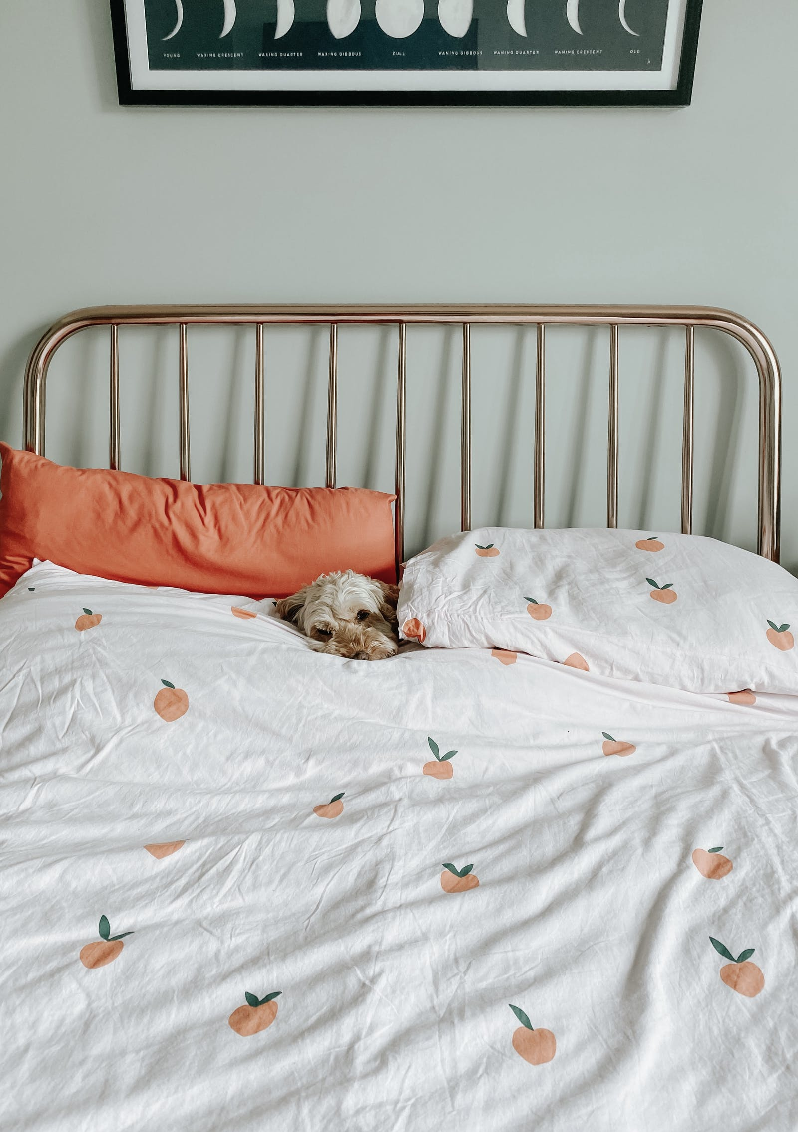 Dog snuggled in bed with orange pattern sheets