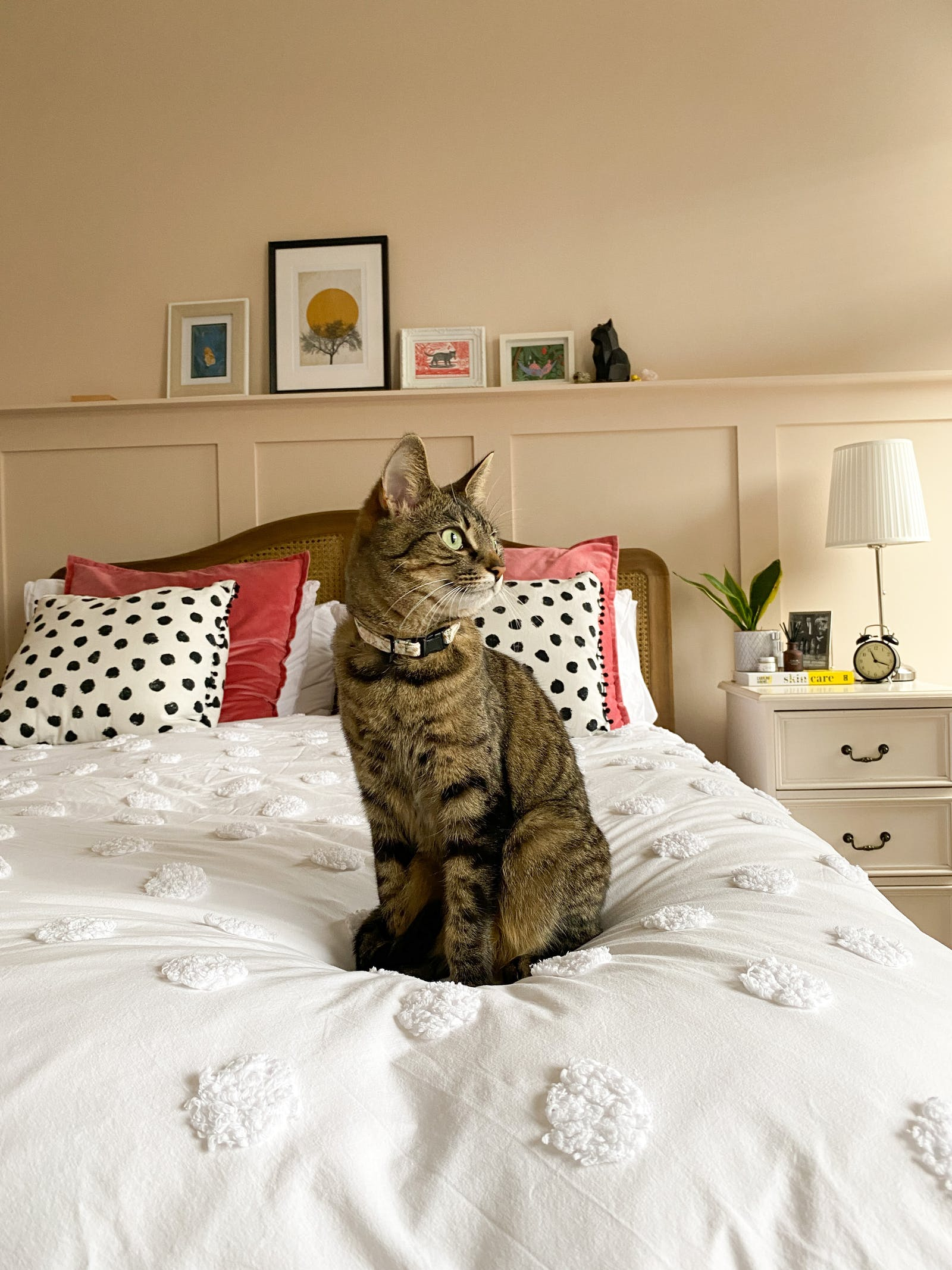 Cat sitting on bed, in bedroom painted in Link Pink 02