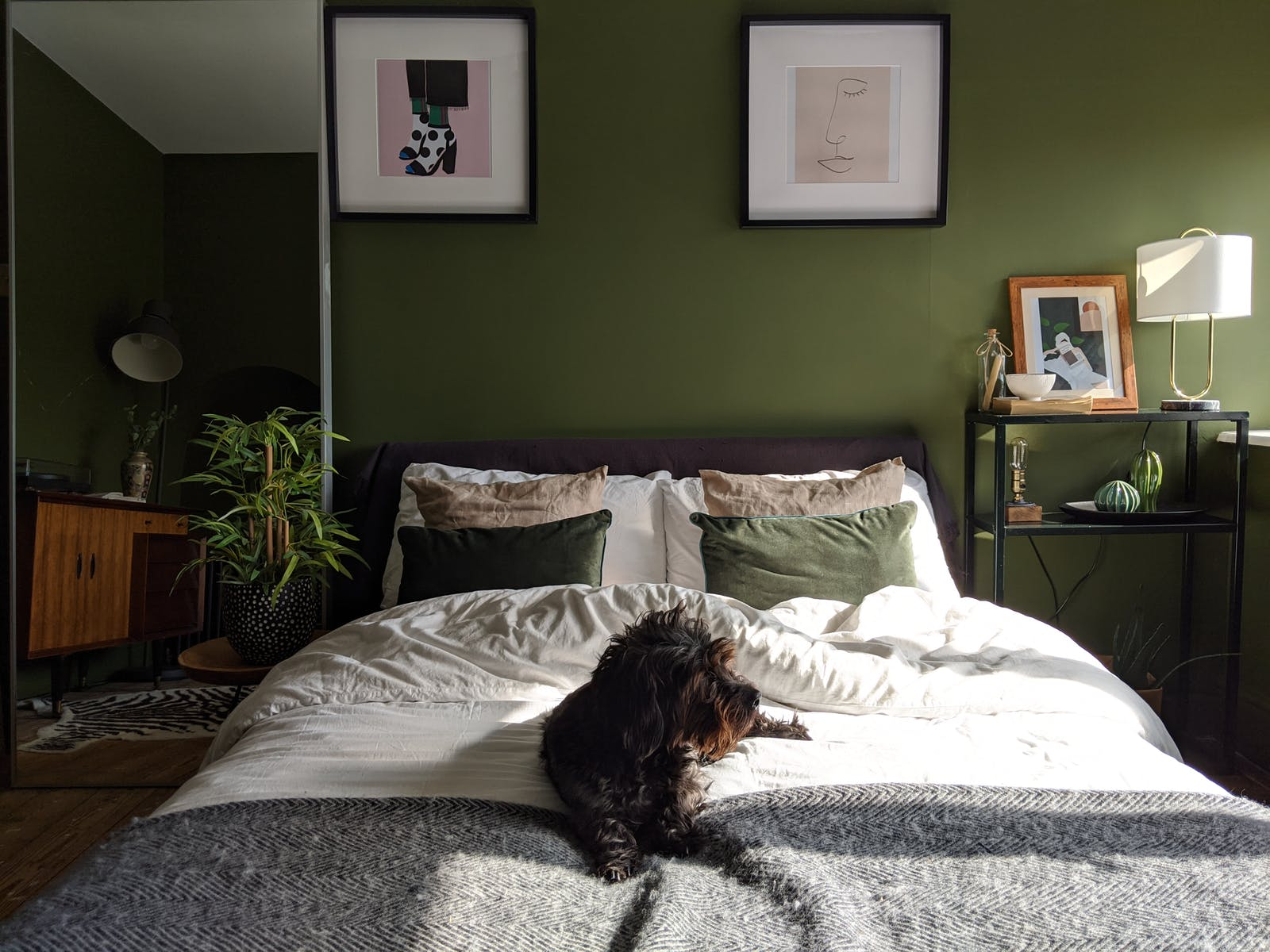 Dog on double bed in a green bedroom painted in Lick Green 05