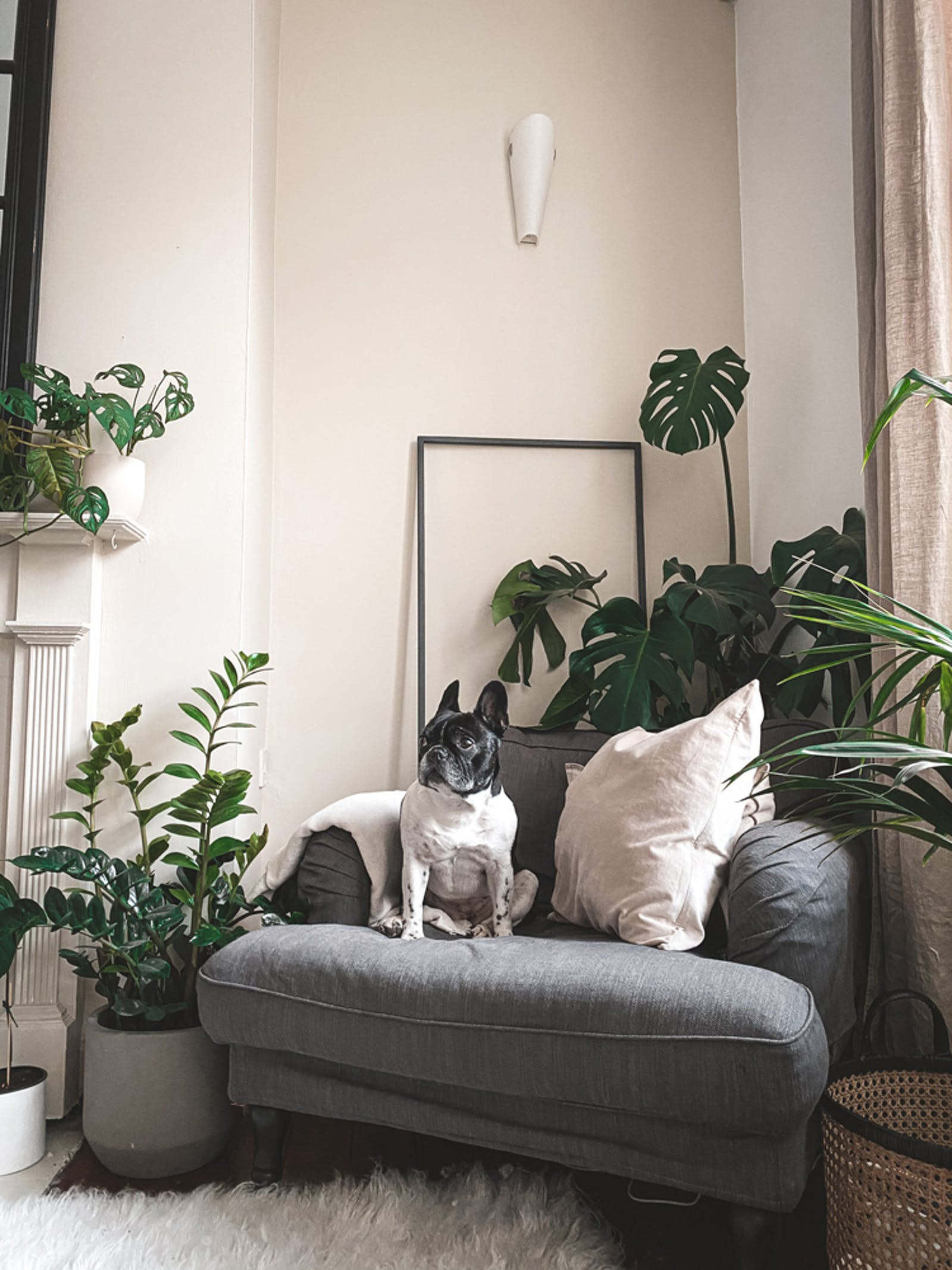 French bulldog sits on sofa in a living room painted in Lick Beige 01