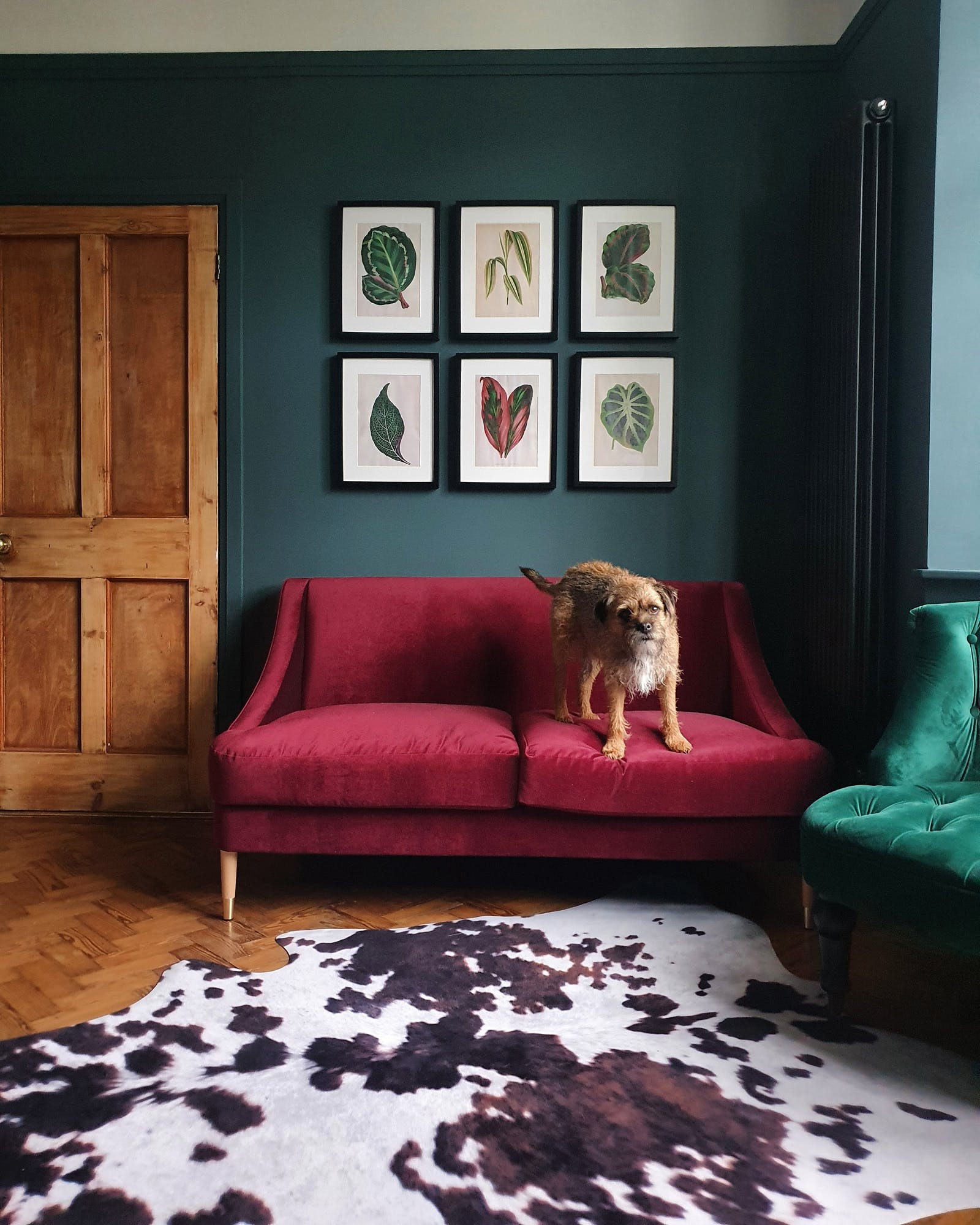 Living room with Lick Teal 03 walls and a dog perching on sofa