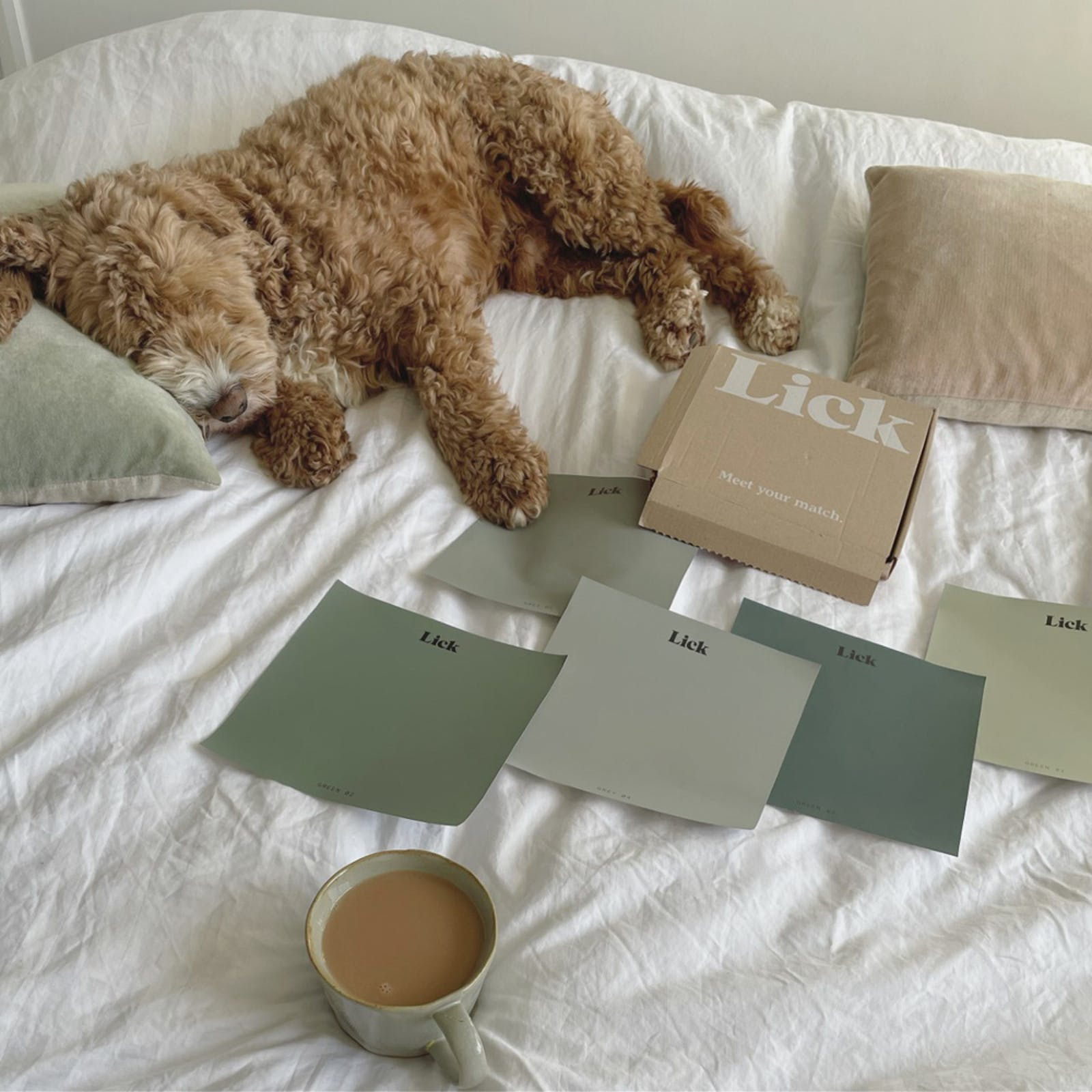 Lick paint samples laid out on bed with dog sleeping next to them
