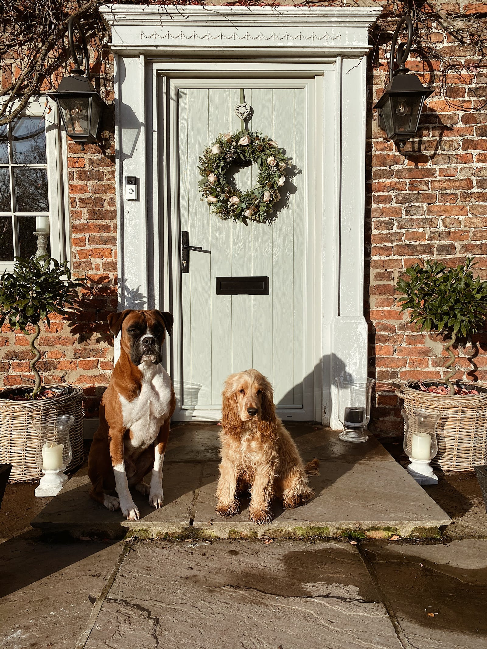 Two dogs sitting in front of the front porch of a light blue painted front door