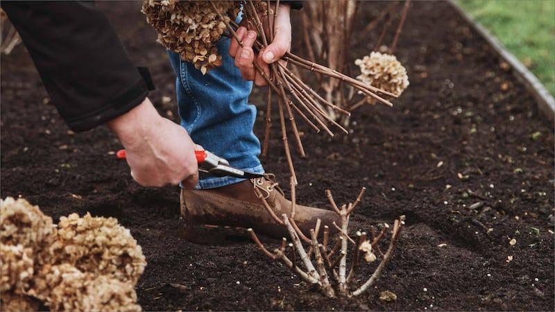 Hard pruning