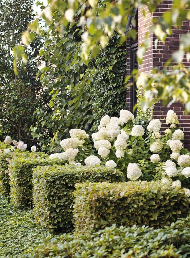 Living Summer Snow® in a garden