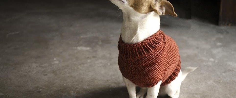 Top 5 free dog sweater knitting patterns
