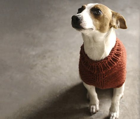 knitted dog sweater pattern for charity