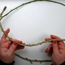 Step 1 - remove foliage from vines