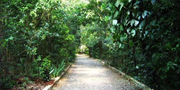 Parque do Ingá - Maringá - PR