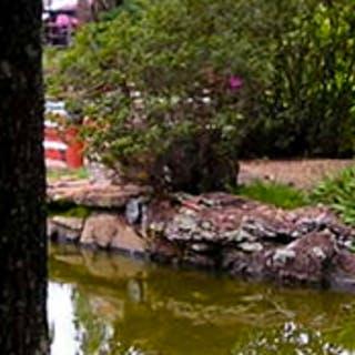 Descubra o Jardim Japonês de Caldas Novas