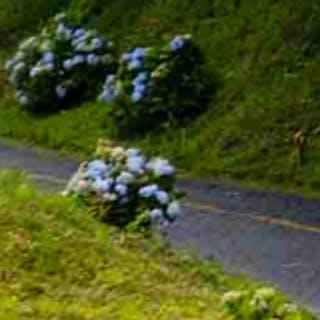 Que tal viajar pela Estrada da Graciosa em Curitiba?