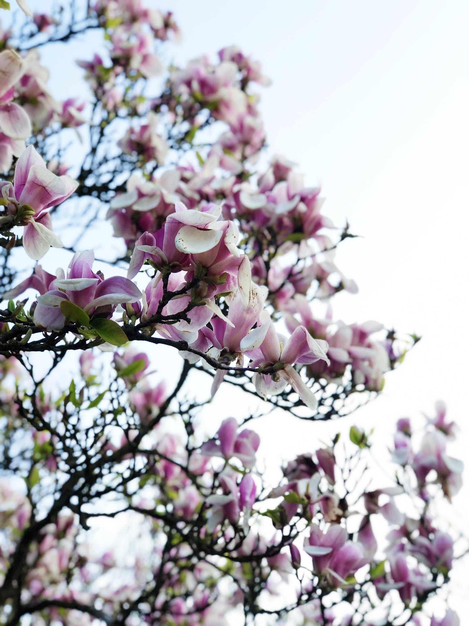 It's no secret that I love Spring and I love to add to my Spring Pinterest board each year.
