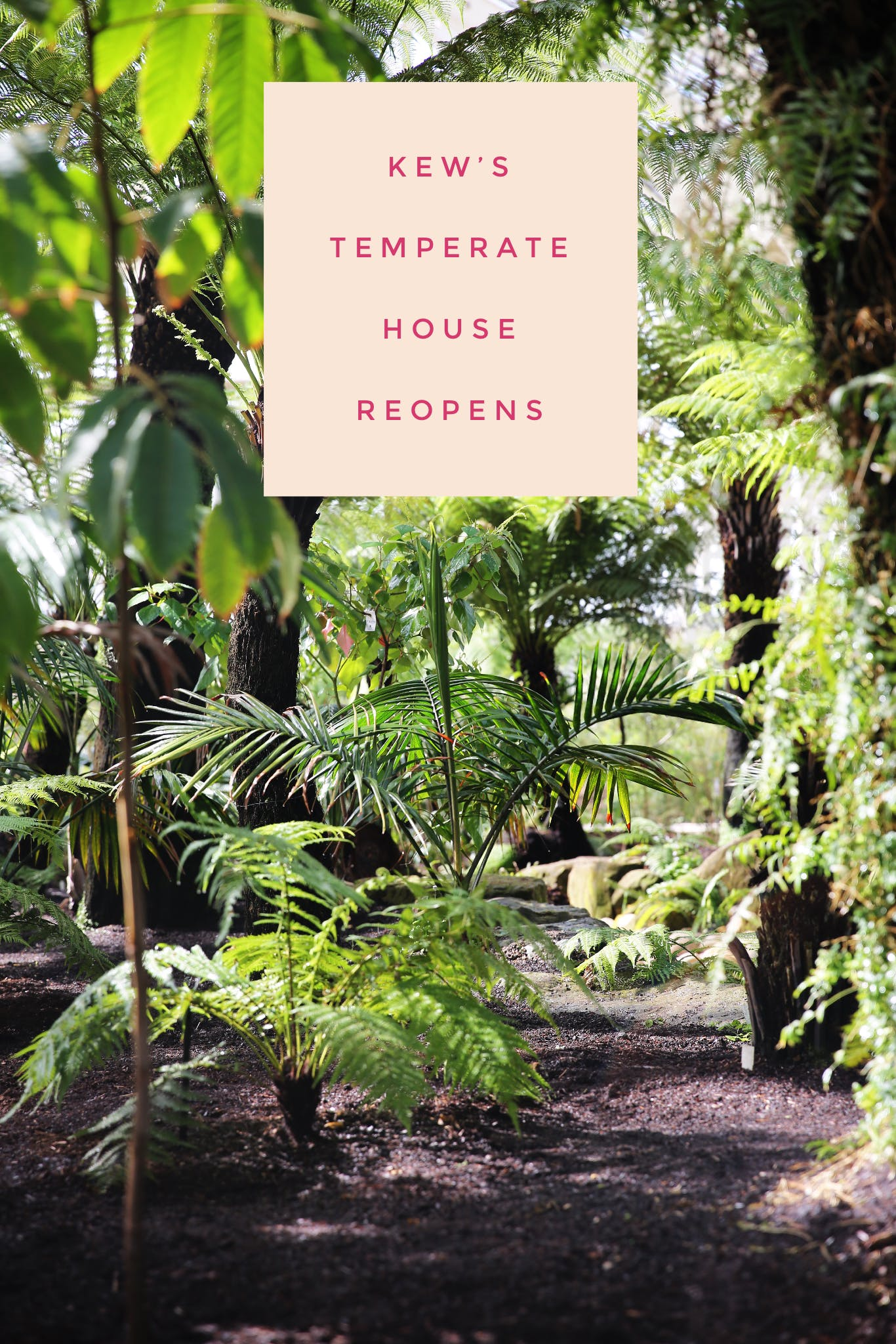Last week I had the pleasure of attending the press day for the opening of Kew's Temperate House