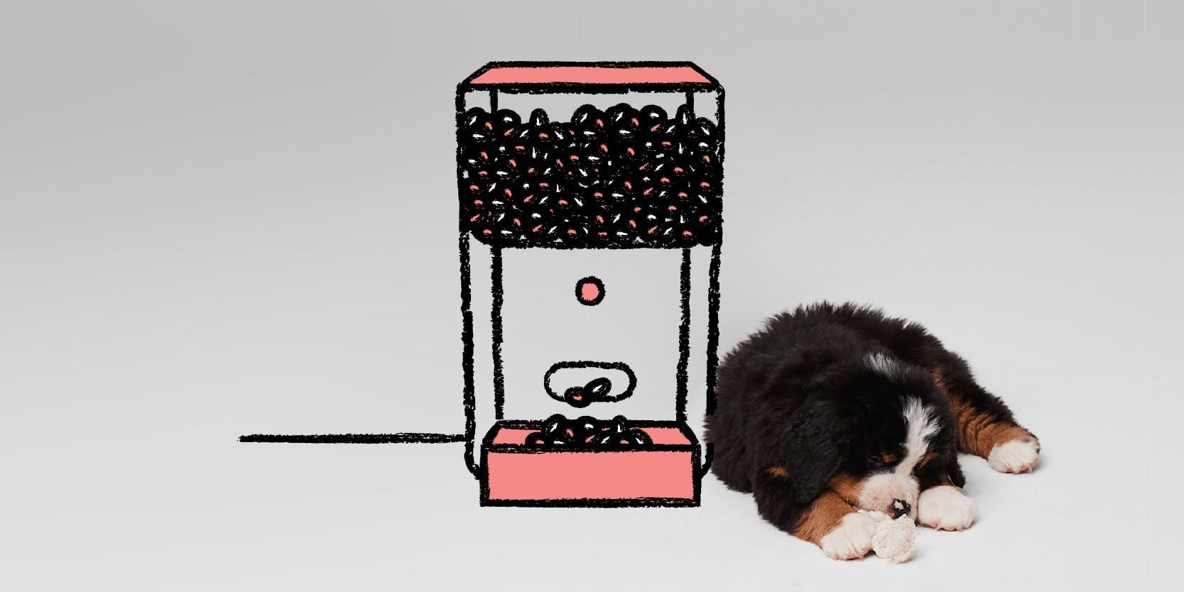 Dog at vending machine