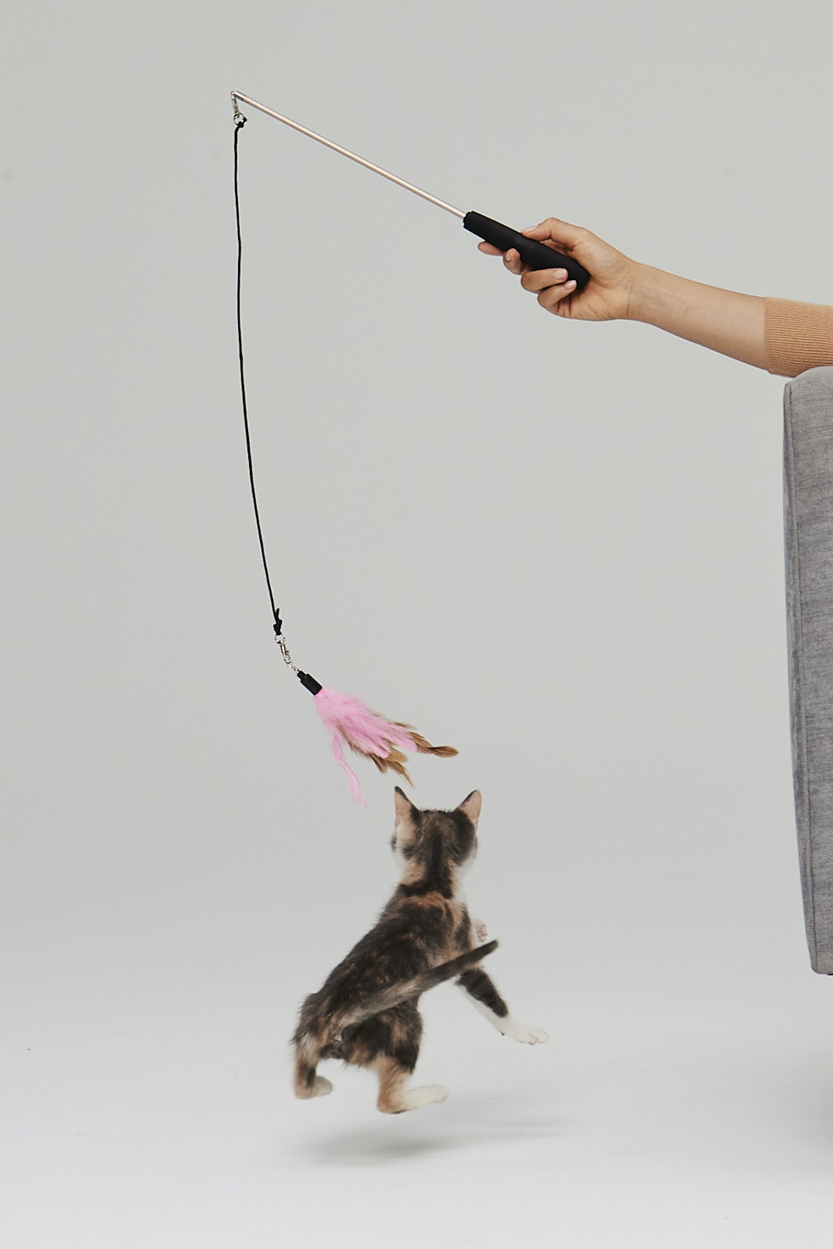Kitten Playing With a Wand