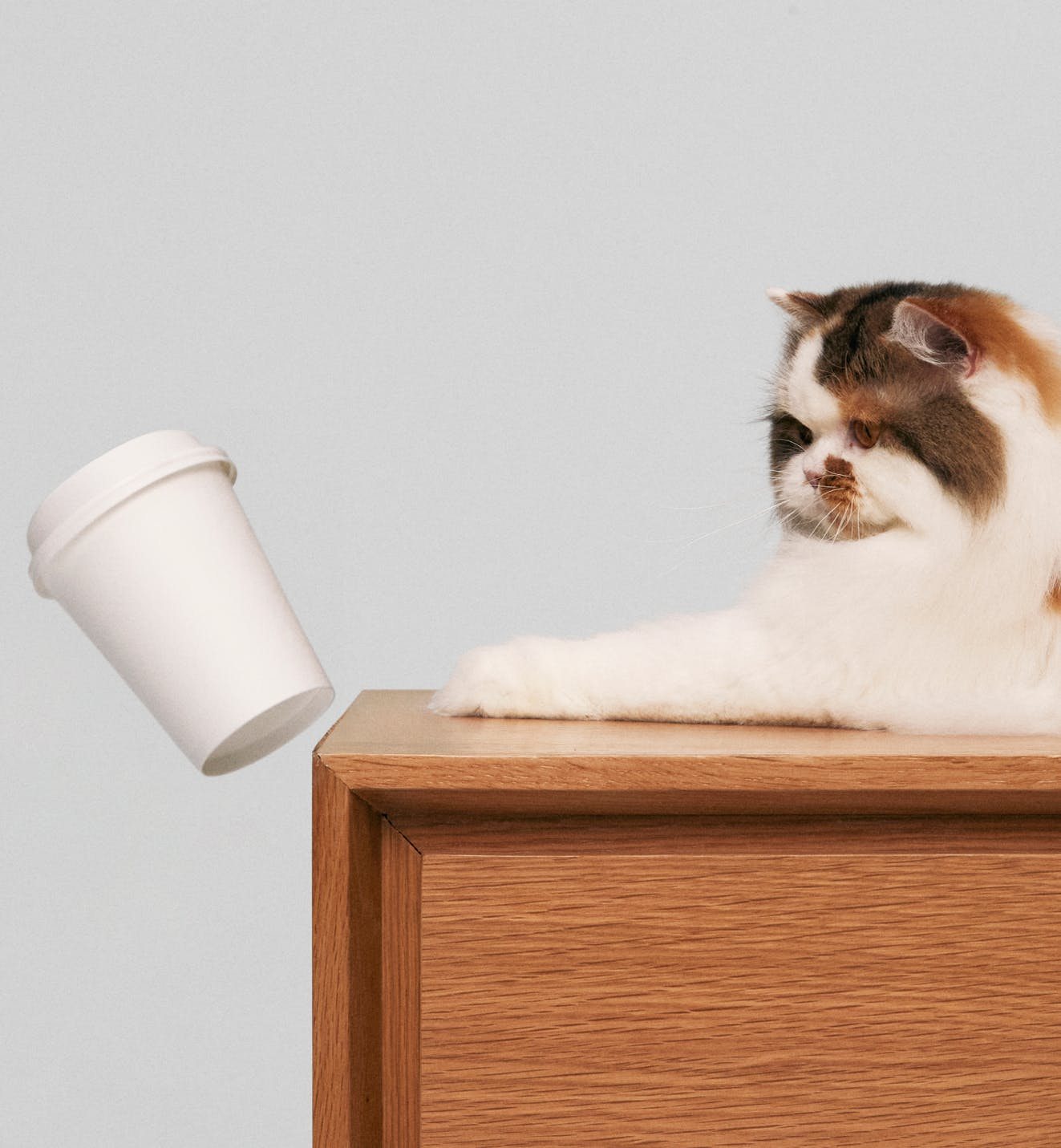 Cat pushing over a cup