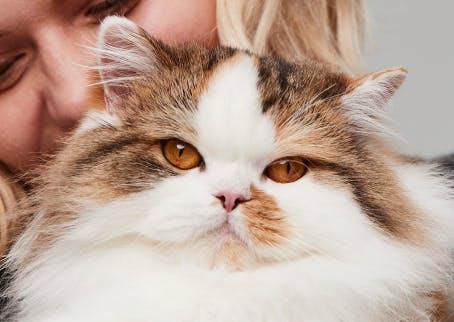 Cat looking straight ahead
