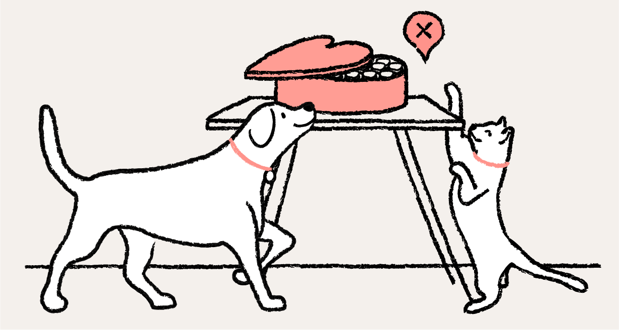 A dog and cat reaching for chocoloate