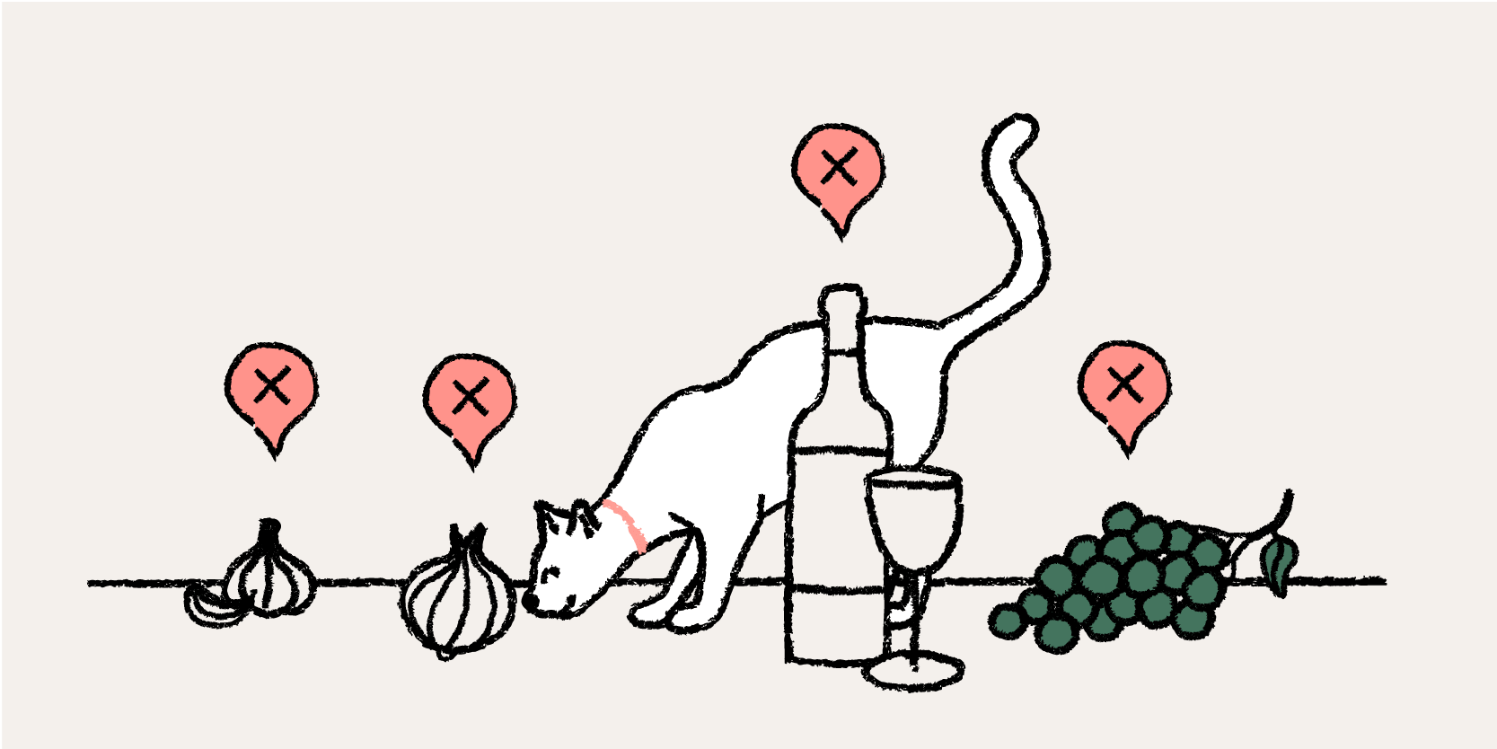 A cat sniffing an onion