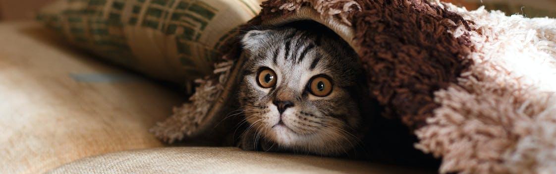 Kitten hiding under a rug