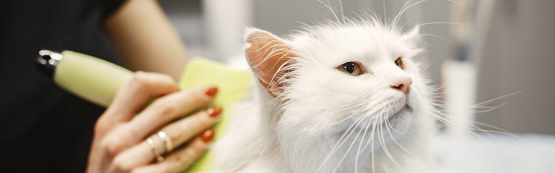 Cat getting groomed in Philadelphia