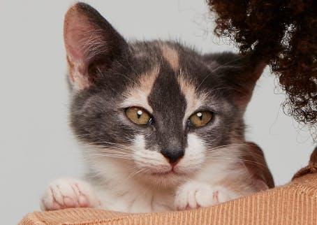 Kitten looking over a shoulder