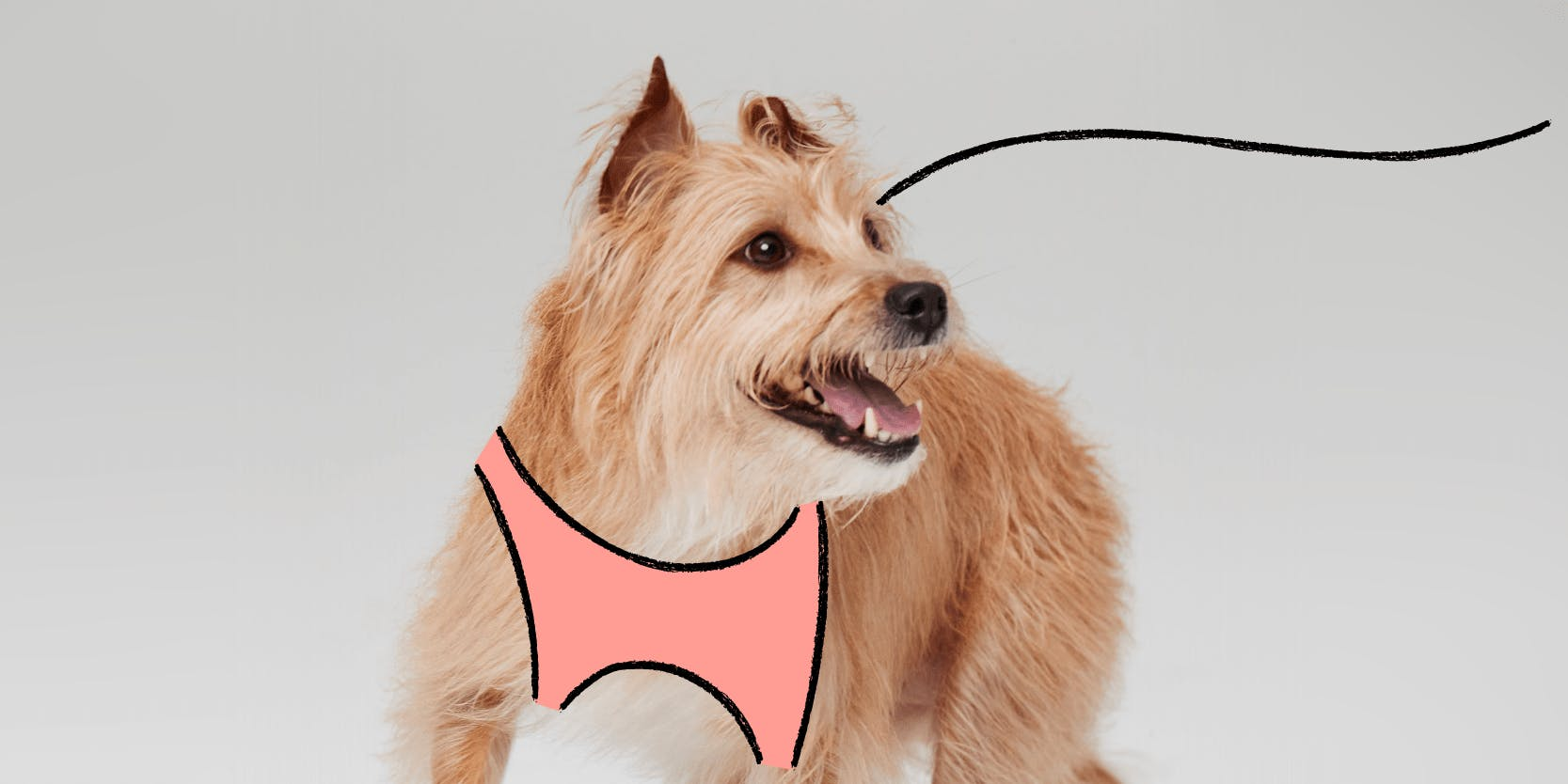 Dog with harness and leash