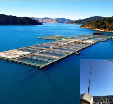 Elastic Rodes unit installed at Waitata Bay in a Salmon Farm