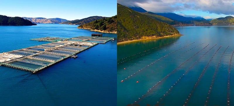 Mussel Farms & Aquaculture