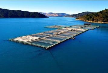 Salmon farm moored with marine flex elastic mooring in New Zealand