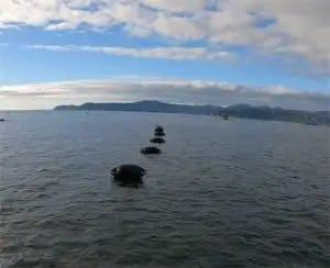 mussel farm buoys marine flex