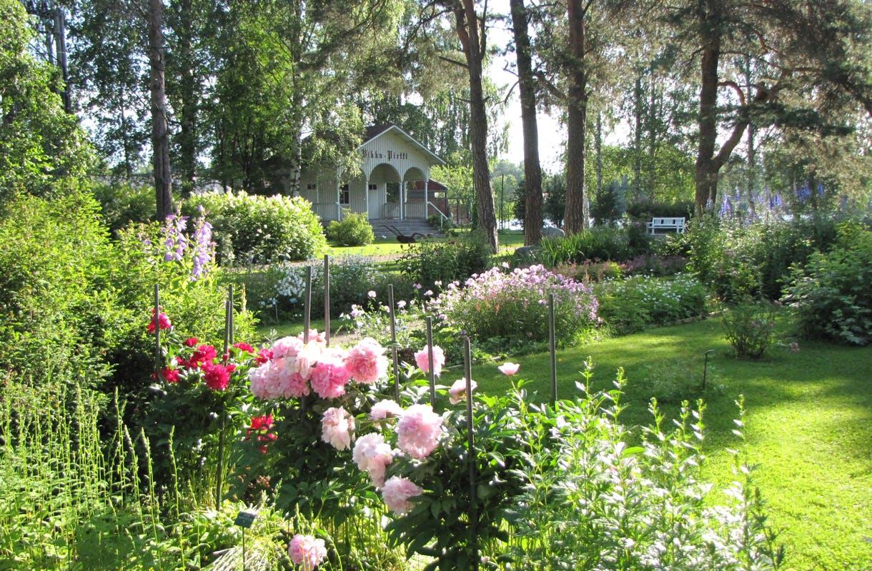 Kangasniemen kesäistä kukkaloistoa