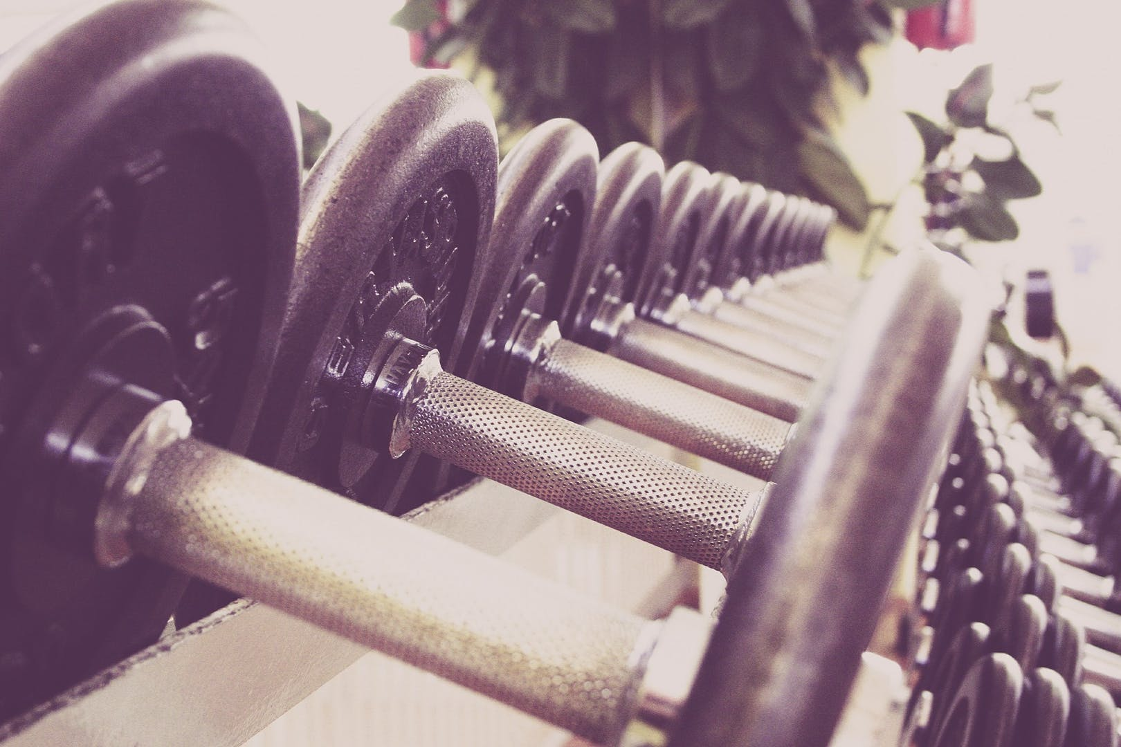 Dumbbells on a rack.