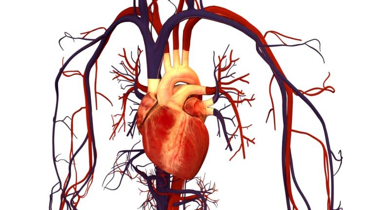 Boala coronariană   Simptome, riscuri și tratament   Centrele Ares