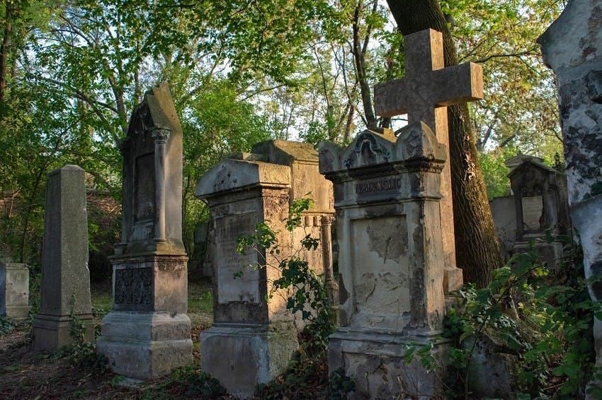 monuments funéraires sous les arbres dans un cimetière