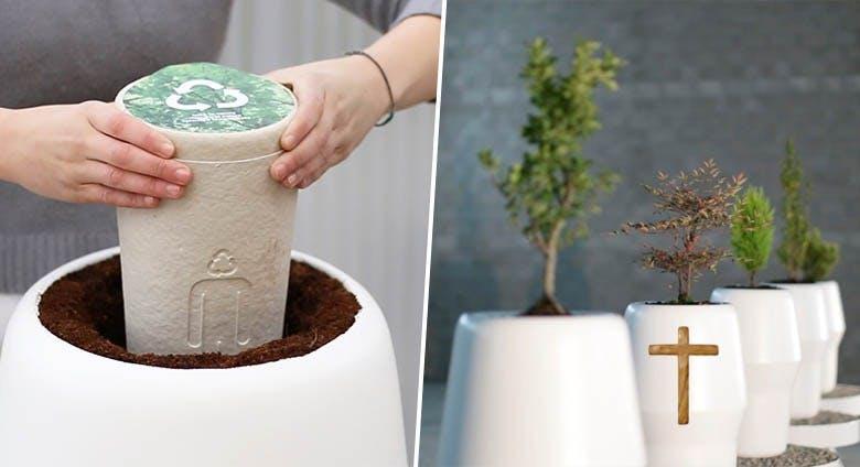 urne biodégradable